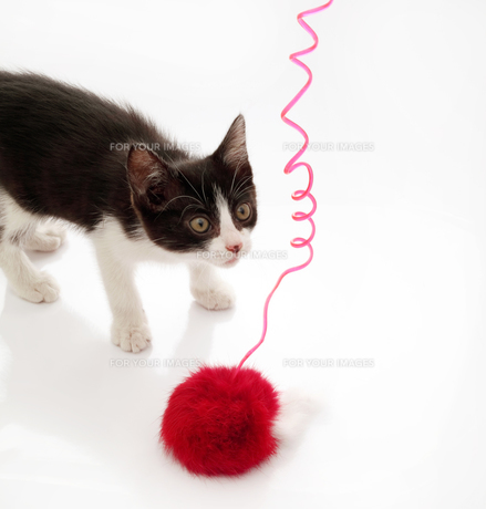猫の素材 [FYI00082671]