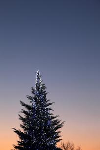 クリスマスツリーの素材 [FYI00083101]