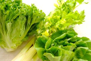 野菜の写真素材 [FYI00084942]