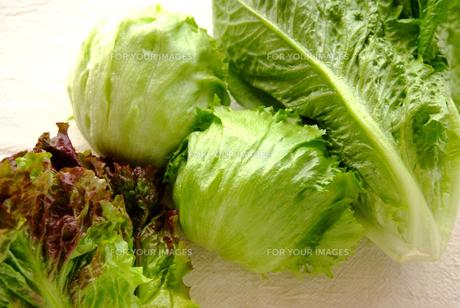 野菜の写真素材 [FYI00084943]