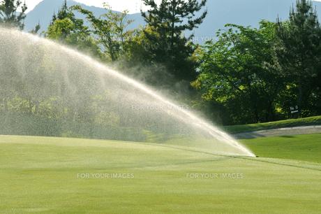 ゴルフ場の散水の写真素材 [FYI00084946]