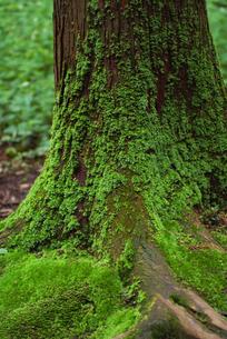 苔の写真素材 [FYI00084990]