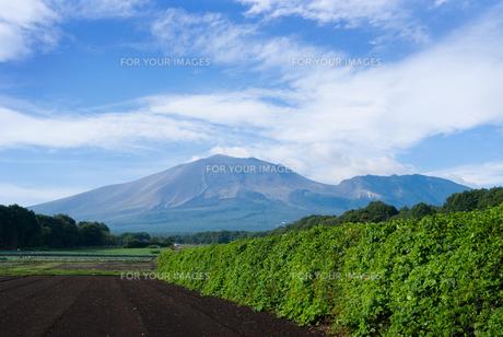 浅間山とソラマメ畑の写真素材 [FYI00085002]