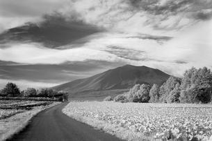 キャベツ畑と浅間山の写真素材 [FYI00085014]