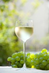 白ワインの写真素材 [FYI00085113]