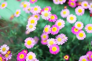 小さな花の集まりの写真素材 [FYI00085136]