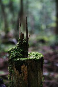 苔と木と虫の共存の写真素材 [FYI00085302]
