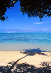 タヒチの砂浜に映る椰子の木のシルエットの写真素材 [FYI00085484]