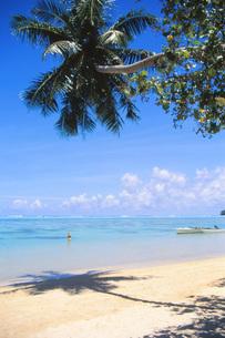 タヒチの海岸に延びる椰子の木の写真素材 [FYI00085487]