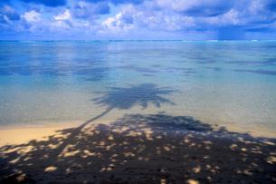 タヒチの海に映る椰子の木の影の写真素材 [FYI00085494]
