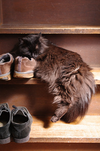 昼寝する黒ネコの写真素材 [FYI00085505]