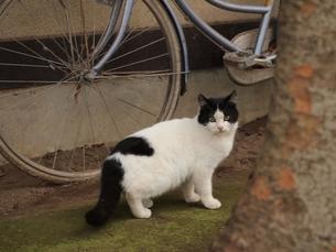 自転車の横に立つ猫の素材 [FYI00085540]
