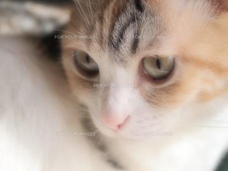 猫のアップの写真素材 [FYI00085581]