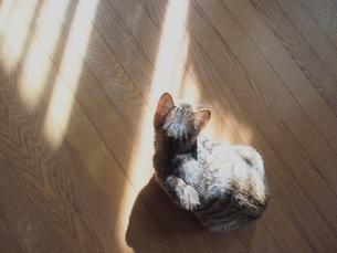 ひなたぼっこしている仔猫の写真素材 [FYI00085598]