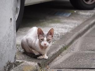 見つめる猫の写真素材 [FYI00085727]