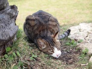スリスリする猫の写真素材 [FYI00085746]