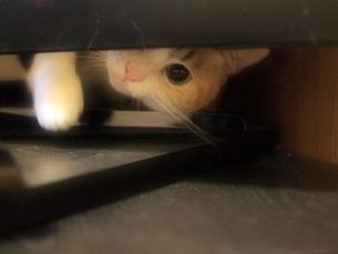 TVの後ろから顔を覗かせる猫の素材 [FYI00085804]