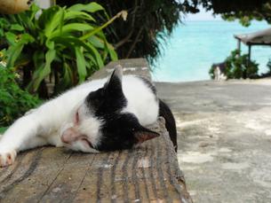浜辺の猫の写真素材 [FYI00085985]