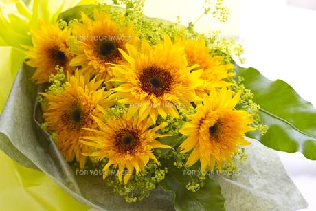 向日葵の花束・品種名/ゴッホのひまわりの写真素材 [FYI00086341]