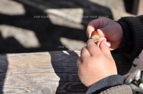 どんぐりを持つ子供の手の写真素材 [FYI00086527]