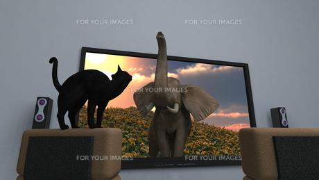 3Dテレビの素材 [FYI00086712]