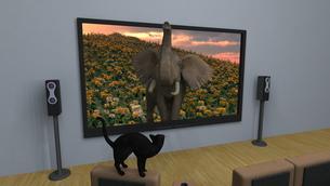 3Dテレビの素材 [FYI00086726]