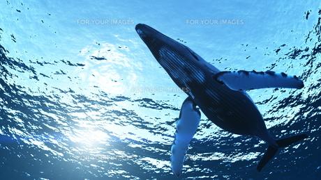クジラの素材 [FYI00086800]