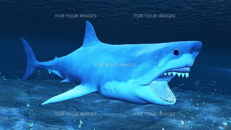 サメの素材 [FYI00086810]