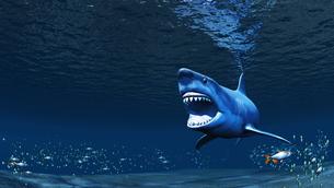サメの素材 [FYI00086815]