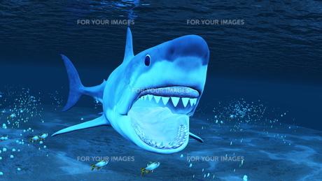 サメの素材 [FYI00086823]