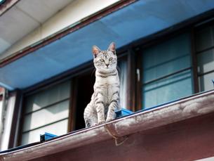 屋根の上の猫の素材 [FYI00087211]