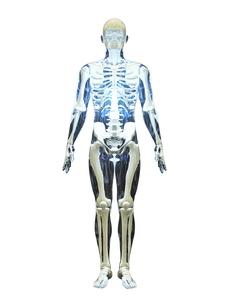 人体模型の素材 [FYI00087591]