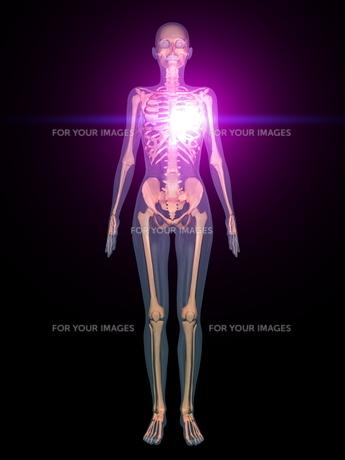 人体 の素材 [FYI00087701]