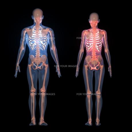 人体 の素材 [FYI00087730]