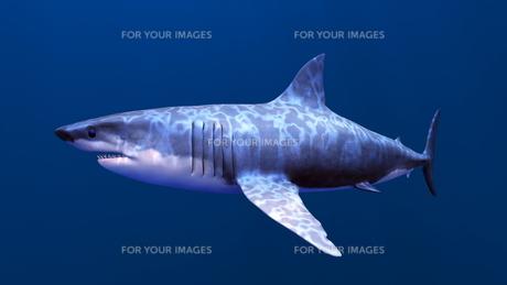 サメの素材 [FYI00087762]