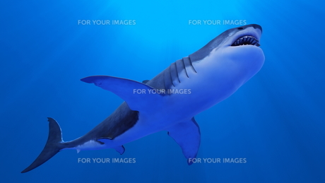 サメの素材 [FYI00087773]