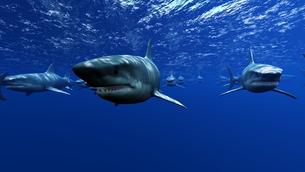 サメの素材 [FYI00087784]
