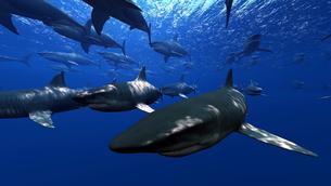 サメの素材 [FYI00087790]