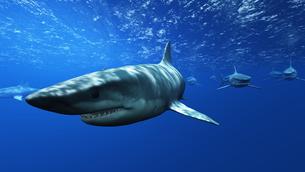 サメの素材 [FYI00087791]