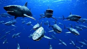 サメの素材 [FYI00087793]