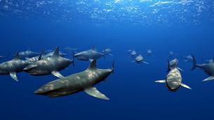 サメの素材 [FYI00087798]