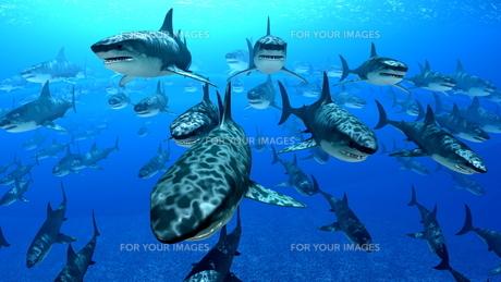 サメの素材 [FYI00087800]