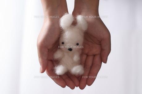 羊毛フェルトのうさぎの写真素材 [FYI00088405]