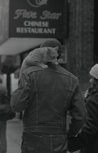 肩猫の写真素材 [FYI00088488]