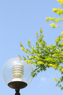 街灯と青空と緑の写真素材 [FYI00088530]
