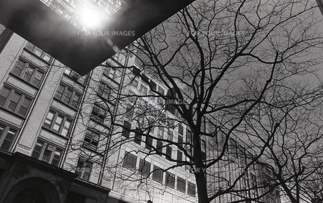 ビルと枯れ木の写真素材 [FYI00088620]