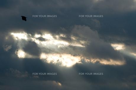 雲間の光と鳶の写真素材 [FYI00088755]