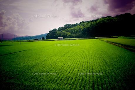 田舎の風景(ピンホールカメラ風)の素材 [FYI00088939]