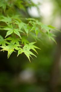 新緑の季節の写真素材 [FYI00088961]