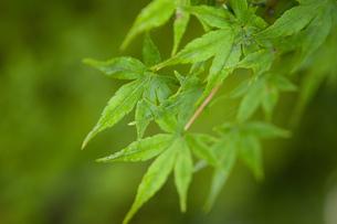 新緑の季節の写真素材 [FYI00088966]